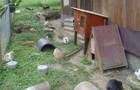 Stallungen und gehege rahels tiere for Kaninchenstall einrichten